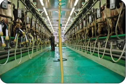 First Floor Milking Parlour Reaps Rewards